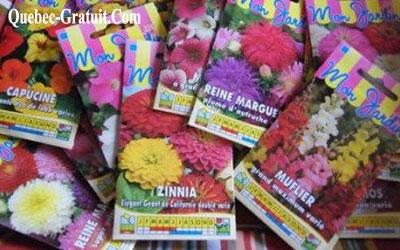 Semences de fleurs gratuites - Beesmatter