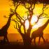 Concours gagnez un voyage inoubliable pour 2 au Kenya