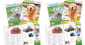 Magazine Animal Wellness Gratuit