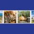 Gagnez un voyage pour 4 au Yukon