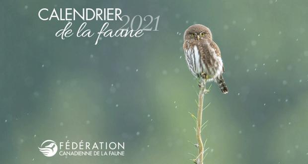 Recevez gratuitement votre calendrier de la faune 2021